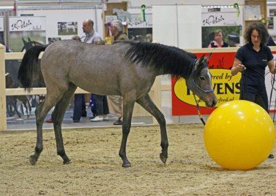 Equitana 2011 (c) Finke