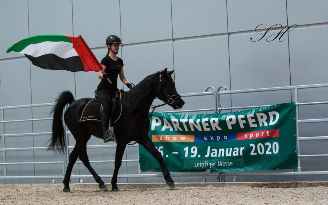 """Sweet Arabians auf der """"Partner Pferd"""""""