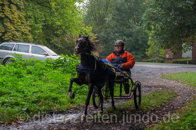 Glandorf-Ponypower