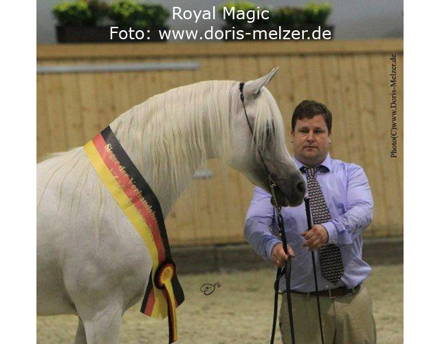 Sieger-Royal-Magic