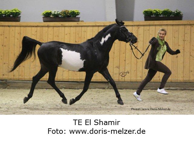 TE-El-Shamir