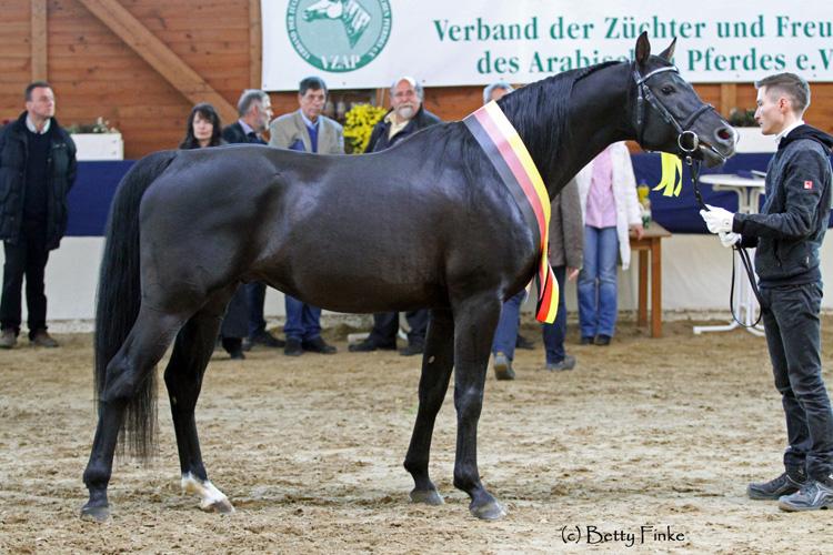 Sieger-Koerung-BailandoShA-BFinke